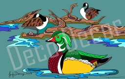 Wood Duck and Canadian Geese